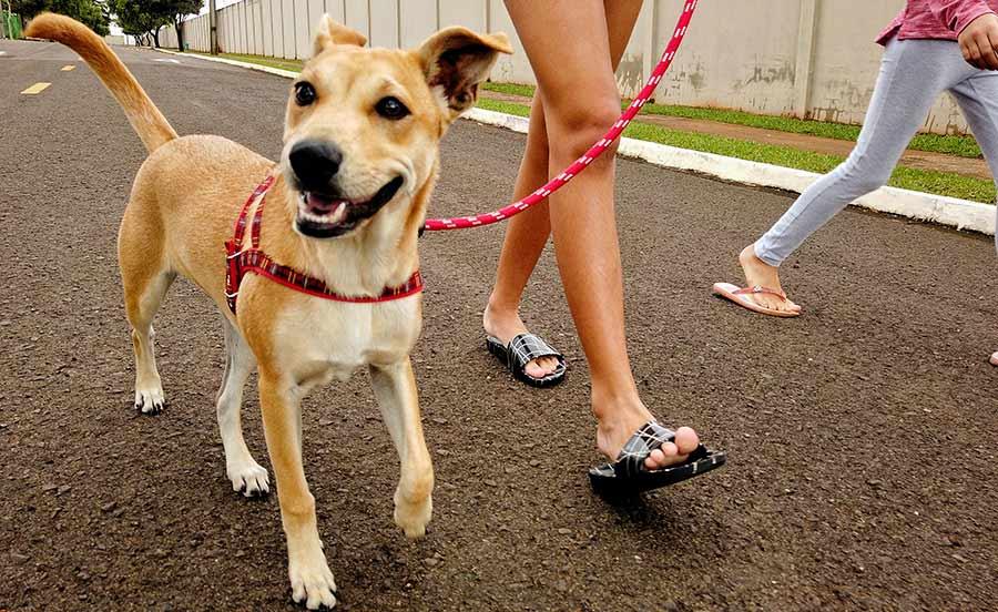 Stock image: dog walkers